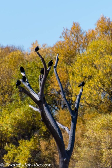 Every bird had his or her own perch on this tree.
