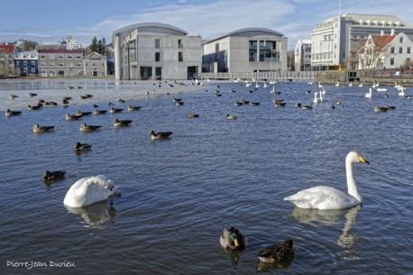 La mairie et les oiseaux aquatiques du Tjörnin, Reykjavik, Islande