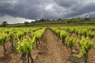 Vignobles des Corbières, 29 mai 2016