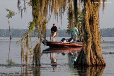 Dans les bayous du Lake Martin, Louisiane, Mai 2015