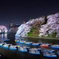 千鳥ヶ淵のボート乗り場付近の桜