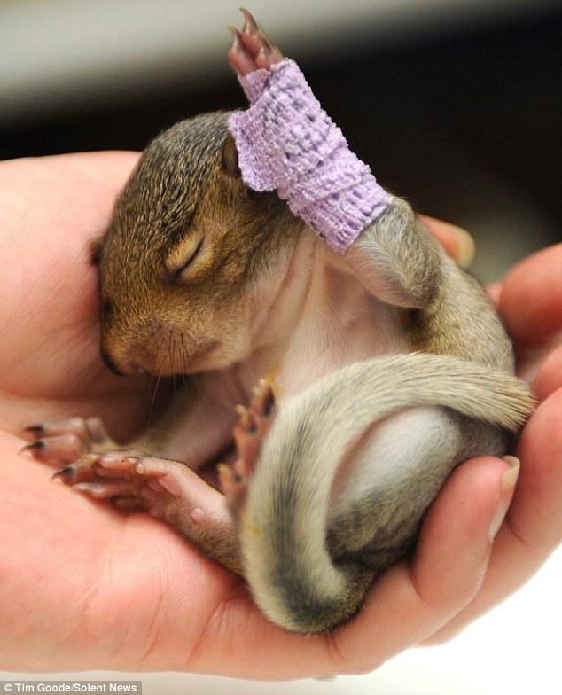 Injured Squirrel Crutches