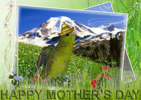 Happy Mother's Day from Pesto the Parakeet and the Trevor Carpenter Photo Challenge Team