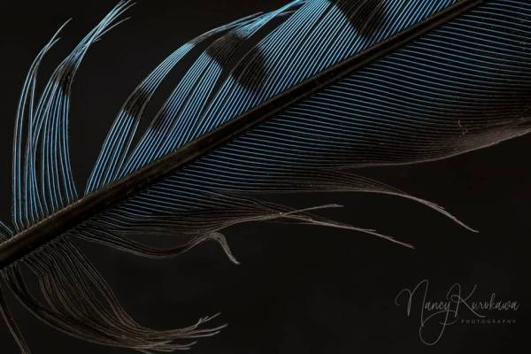 Feather by Nancy Kurokawa