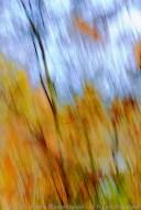 02 One Orange Leaf