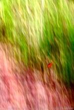 04 One Red Leaf
