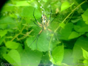 Spider with 2x Lens 2