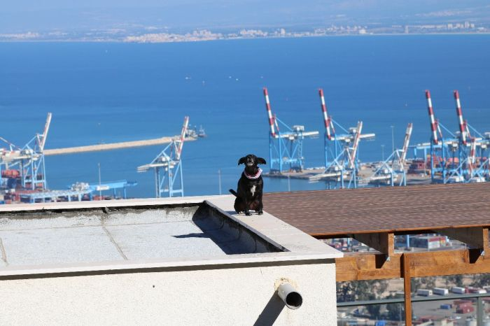 Dog on a hot tin roof