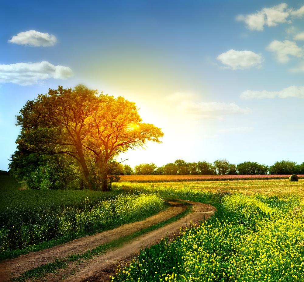 Image result for spring photography