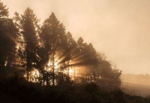 light rays in foggy autumn morning - sunrise in the forest