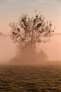 foggy autumn morning - lone tree