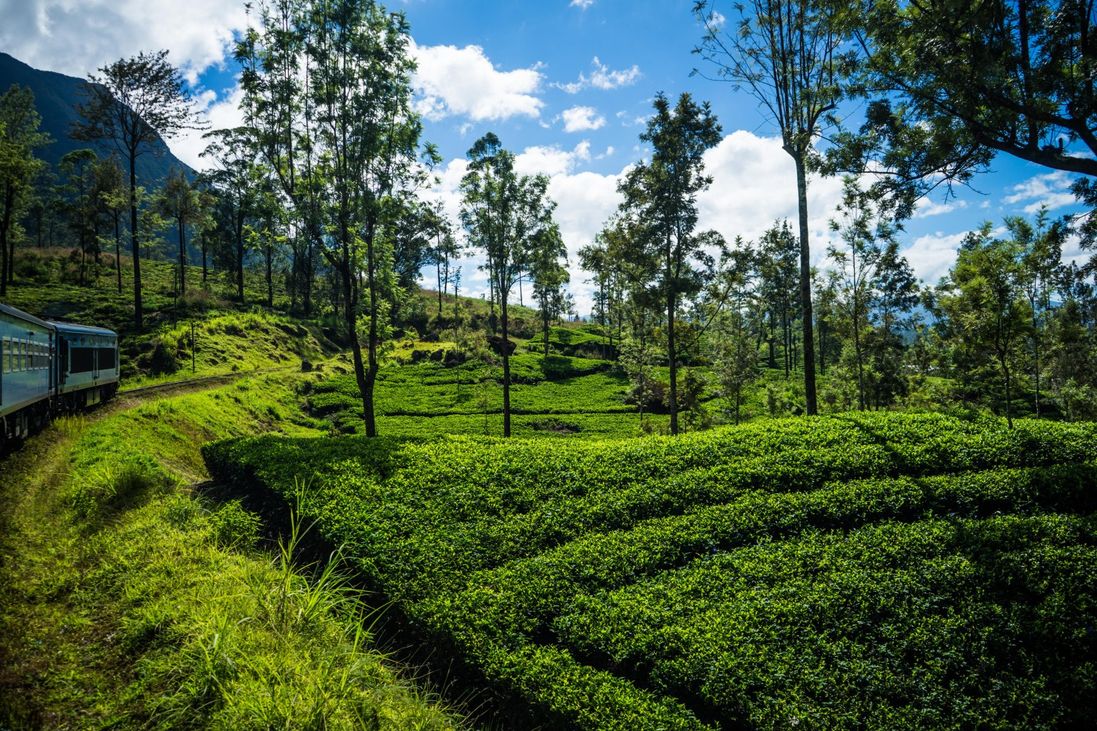 Ella-Kandy train passing through the tea plantations in Nuwara Eliya