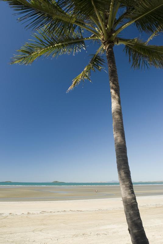 Free Stock Photo Of Lone Palm Tree Photoeverywhere