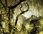 Peter Bialobrzeski, Paradise #38, 2008 C-print 120 x 160 cm Courtesy of Robert Morat Galerie