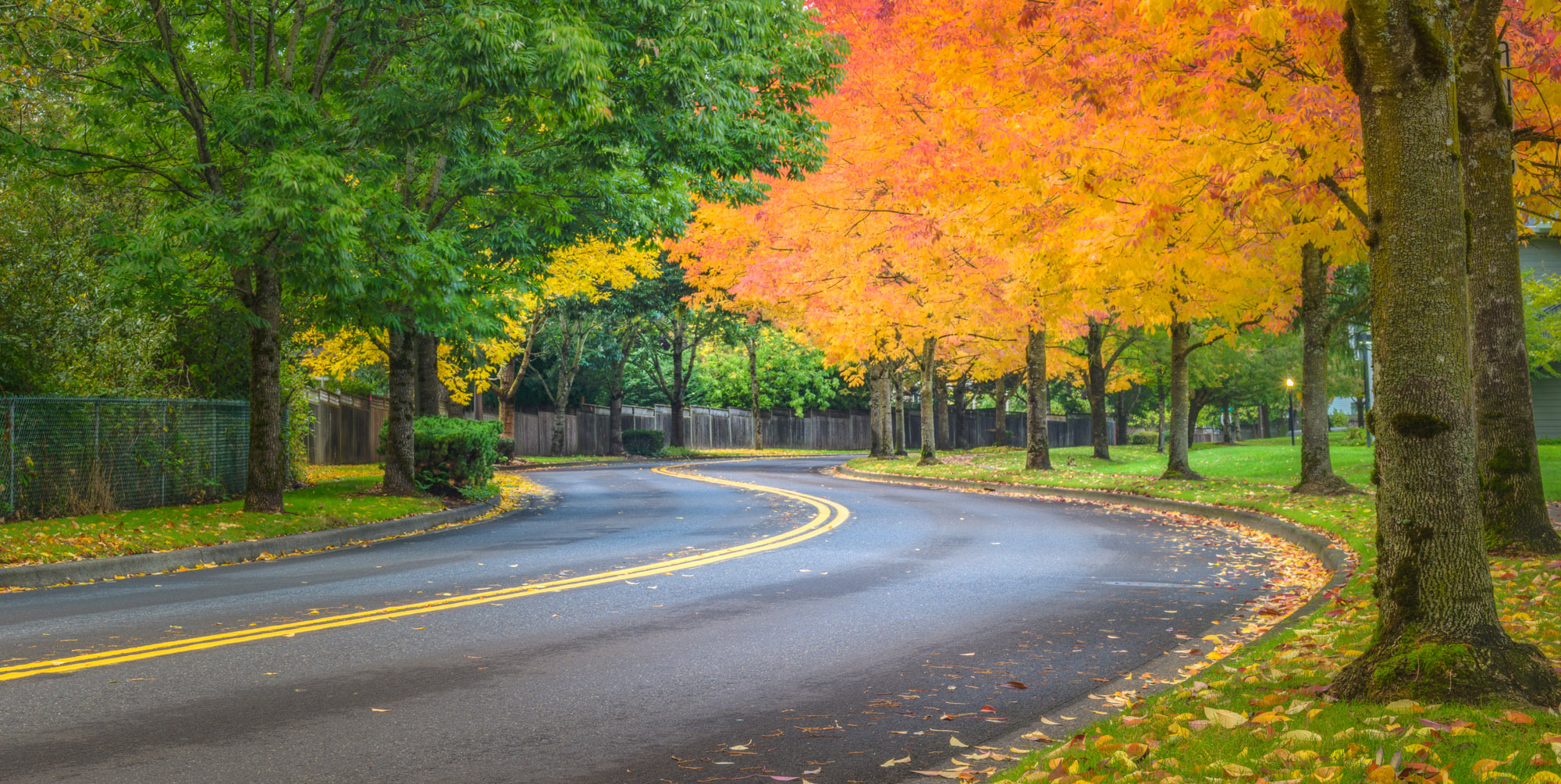 Contrast is King: Quick Tip for Autumn Colors | Photofocus