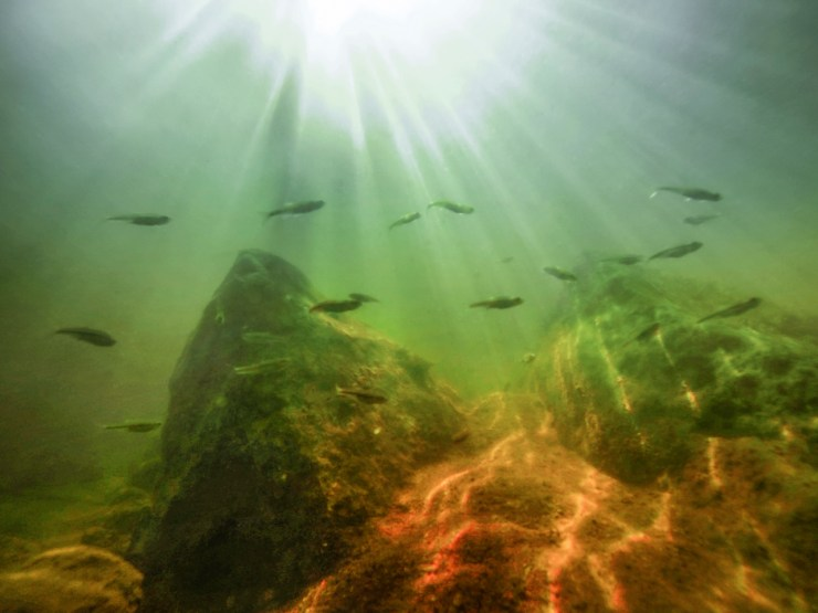 mark-morrow-photofocus-aquatic-life-with-1280