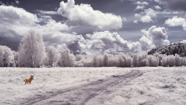 Processing an Infrared Image using Lightroom and Photoshop