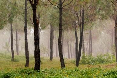 A foggy morning in Vietnam
