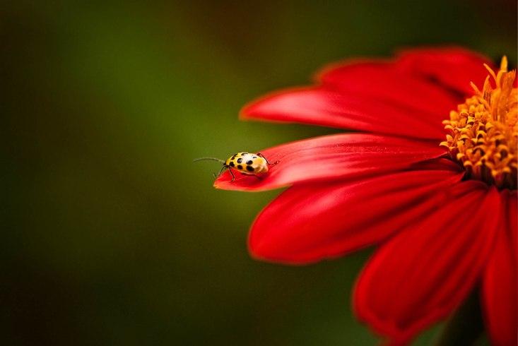 Flower with Ladybug