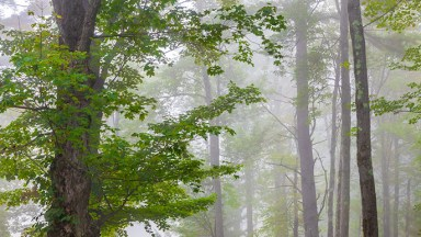 Photo of the Day: September Mist