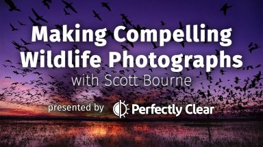 Join Us For a Free Webinar on Wildlife Photography with Scott Bourne