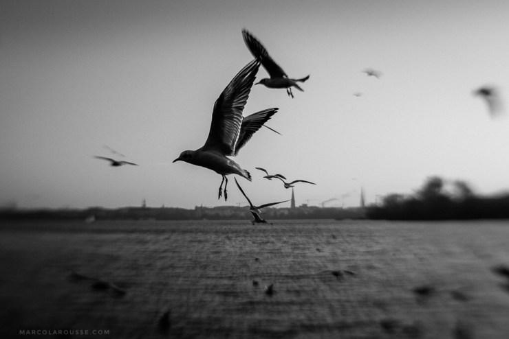 shoot-what-it-feels-like-ml-birds