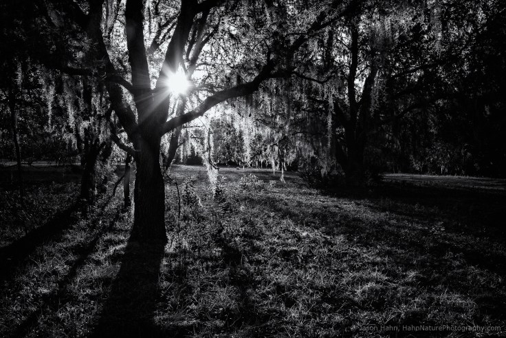 © Jason Hahn, HahnNaturePhotography.com. Canon 5d MkIII with Tamron 15-30mm lens