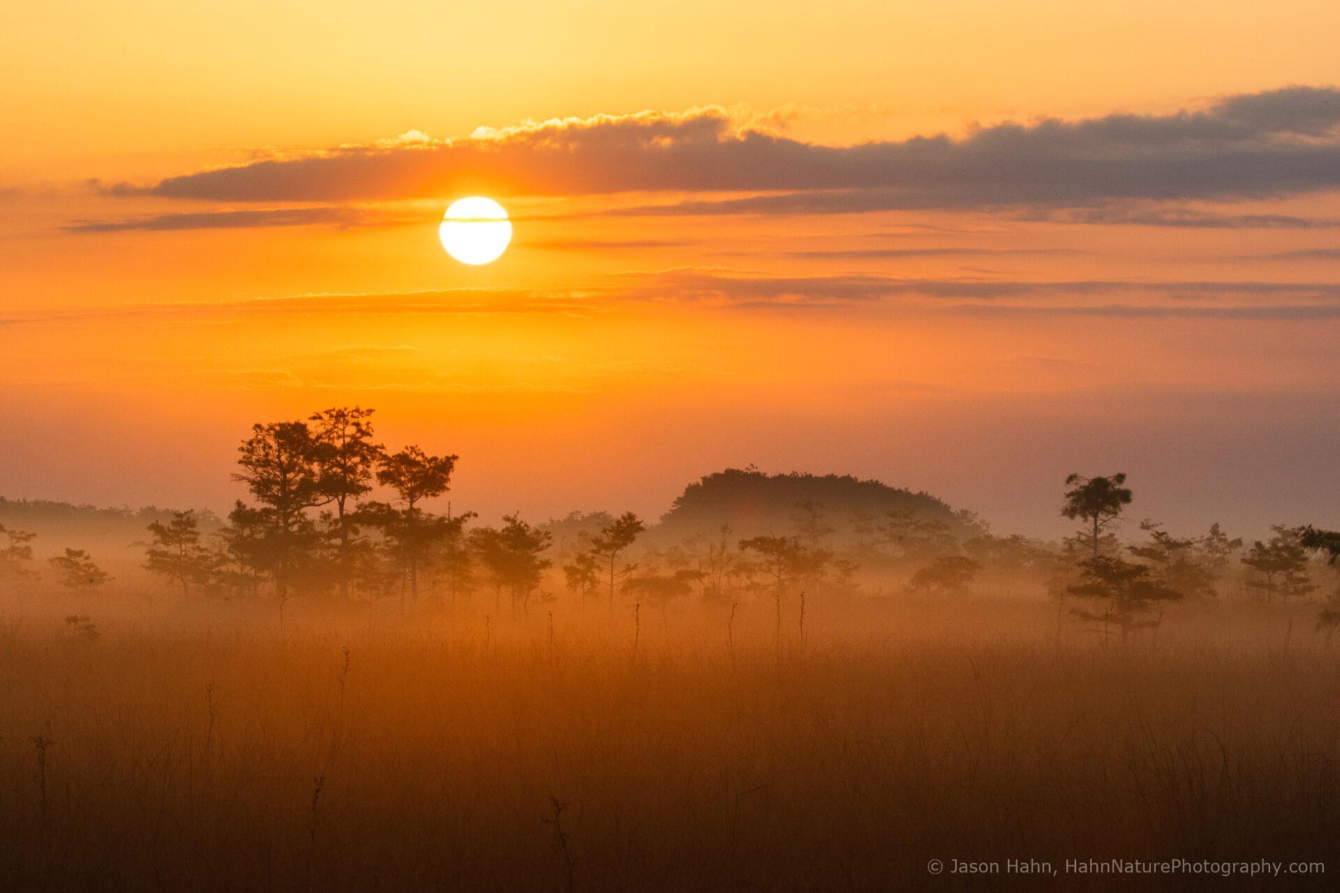 Photography in the Fog   Photofocus