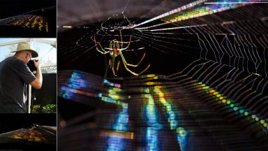 "Making Photos: ""Rai"" the Rainbow Spider"
