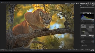 How to Make Wildlife Photos Look Great with ACDSee Ultimate
