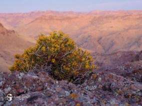 Desert flora at sunrise