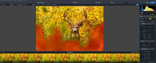 wildlife-tone-map-lighten and noise layer