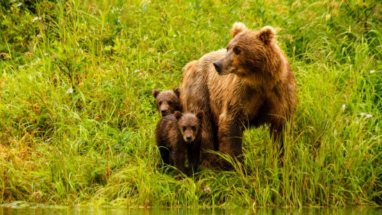 The Life Cycles Approach to Wildlife Photography - Part 1: Learning and Telling the Story