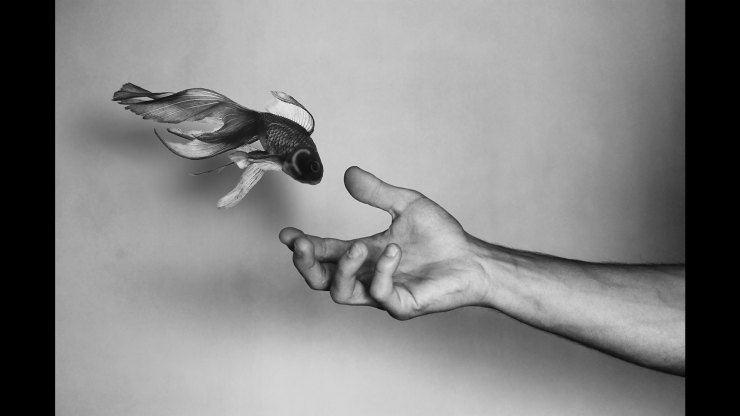 Goldfish and hand