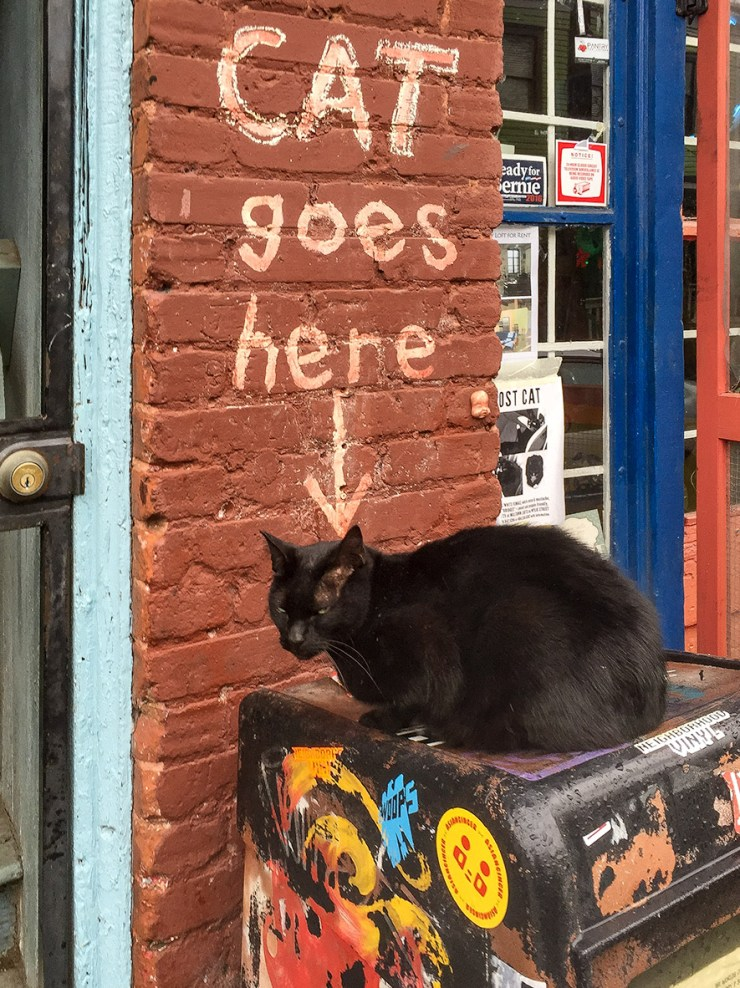Cat goes here by Kevin Ames ©2016