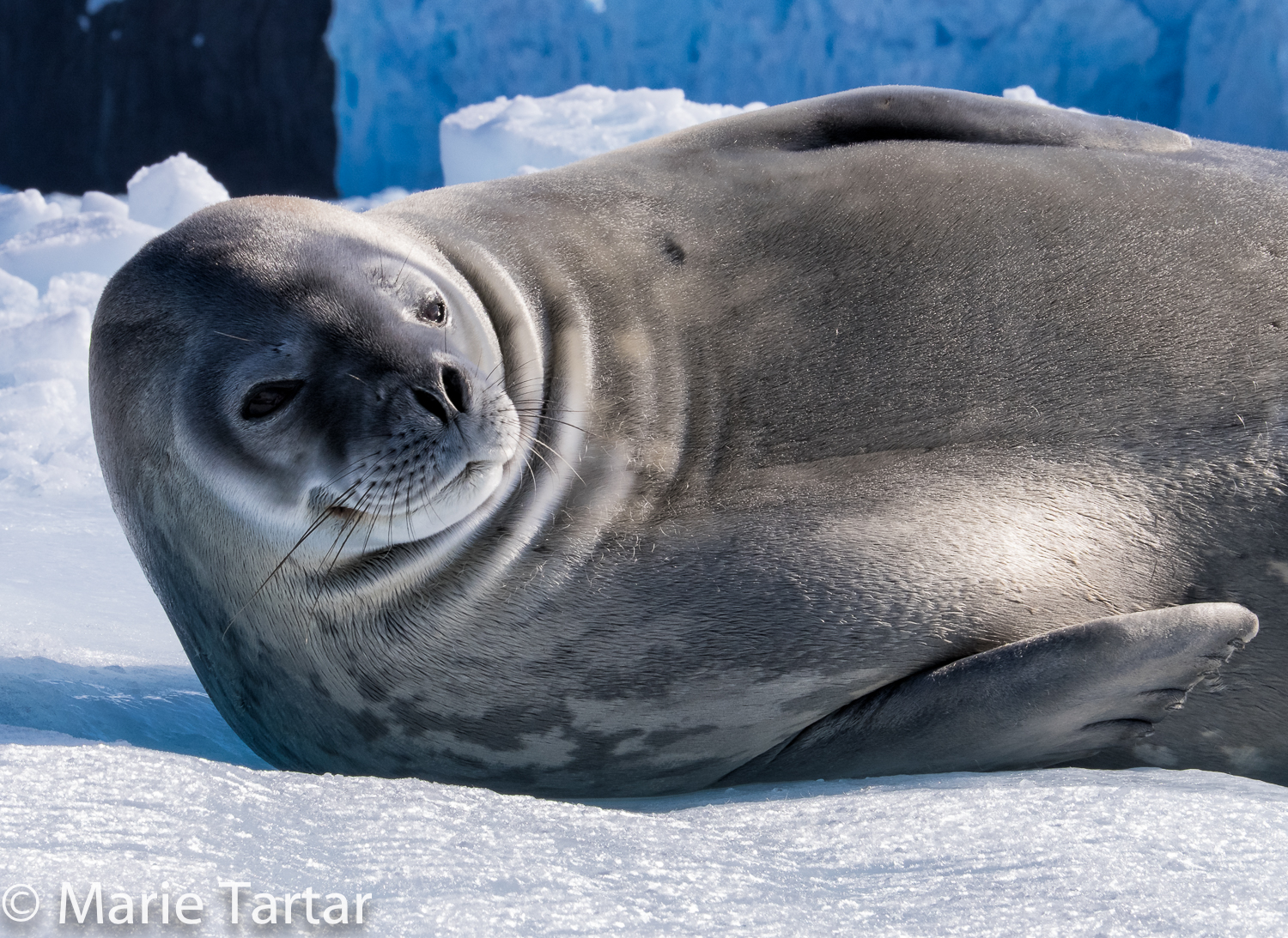 The Traveling Photographer: Off to Antarctica