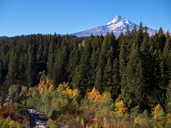 Creek and Mt Hood