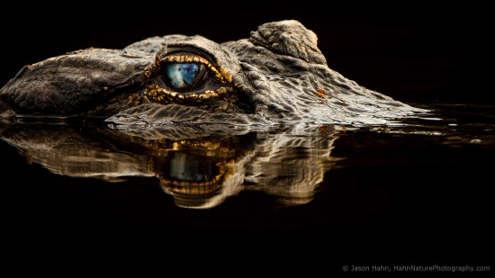 10 Quick tips for nature photographers