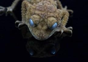 Julie Powell_Gecko