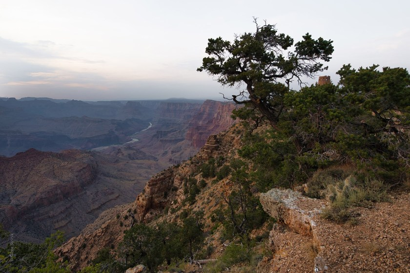 A canyon, a tree and a boring sky. Photo by Dima Sytnik.