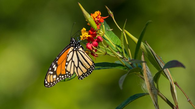 On Nature: Saving the butterfly