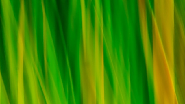 Abstract photo art from nature