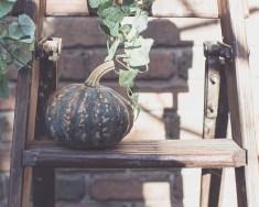Julie Powell_Pumpkins-2745