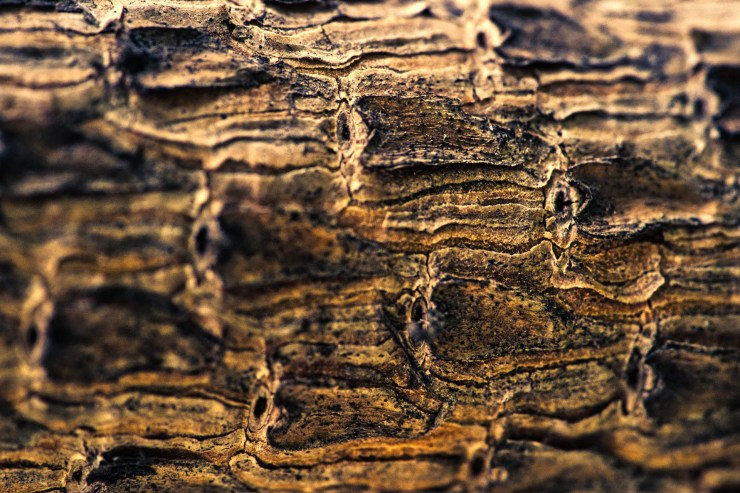Tree bark macro Sony lens