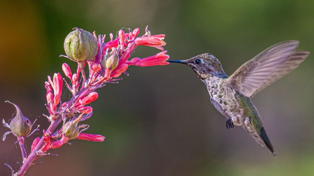Hummingbird photography without a flash