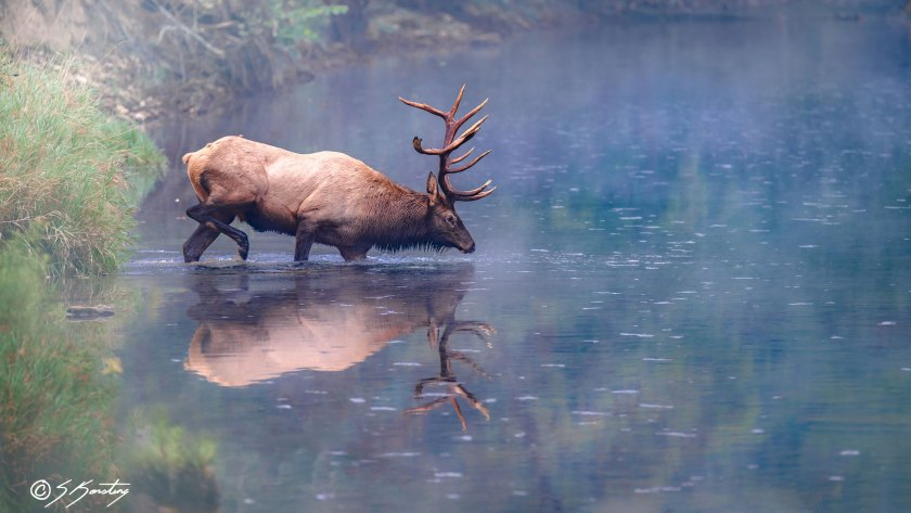 Steven Kersting, nature and wildlife photographer
