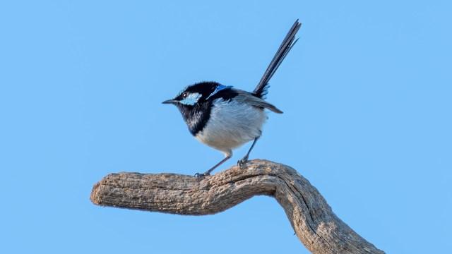 How to fix a blurry bird photo