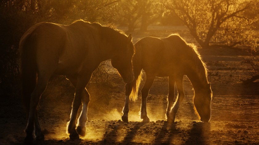 salt_river_horses_4070030_2560p