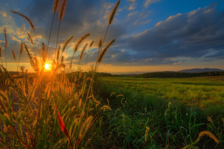Evening gold along the Blue Ridge Parkway, Roanoke VA