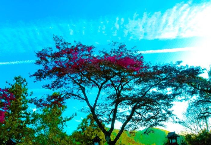 紅葉とひこうき雲